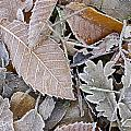 Cold Leaves by Guido Montanes Castillo