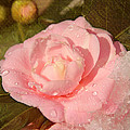 Cold Swirled Camellia by Jemmy Archer
