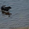 Cold Water Fetch by Linda Kerkau