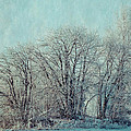 Cold Winter Day by Ari Salmela