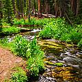 Coldwater Creek By Frank Lee Hawkins by Eastern Sierra Gallery