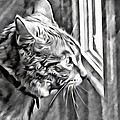 Cole Kitty Watchful by Alice Gipson