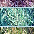 Collage Of See Grass by Susanne Van Hulst
