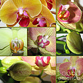 Collage Orchids 01yellow Green - Elena Yakubovich by Elena Yakubovich