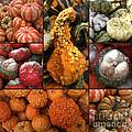 Collage - Pumpkins - Gourds - Elena Yakubovich by Elena Yakubovich