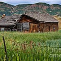 Collapsed Log House In Utah by Louise Heusinkveld