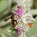Collecting Nectar by Janice Byer