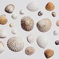 Collections by Katie Jones