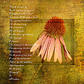 Collective Poem With Echinacea Flower by P S
