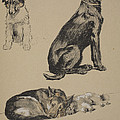Collie, Retriever, Alstian And Keeshund by Cecil Charles Windsor Aldin