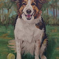 Collie by Pet Whimsy  Portraits