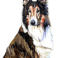 Collie by Tracy Rose Moyers
