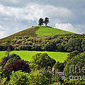 Colmers Hill At Symondsbury by Susie Peek