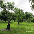 Colonial Apple Orchard by Susan Carella