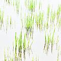 Colony Of Grass by Dan Carmichael