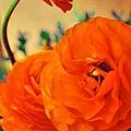 Color 149 by Pamela Cooper
