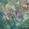Color Corals by Adam Jewell