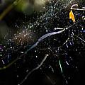 Color Dots Spider Net by Yulia Kazansky