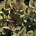 Color Engraving 1 by Joe Faherty