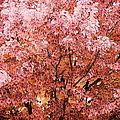 Color In The Tree 03 by Thomas Woolworth