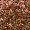 Color In The Tree 04 by Thomas Woolworth