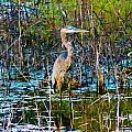Color Me Heron In Watercolor by Lorna R Mills DBA  Lorna Rogers Photography