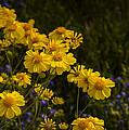 Color Me Yellow  by Saija  Lehtonen