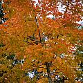 Color Of Fall by Dale Powell
