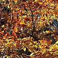 Color Rush by Gene Cyr