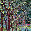 Color Storm by Bill Jonas