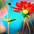 Color Wheel by David Coleman