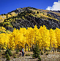 Colorado Autumn Hike by Janice Pariza