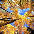 Colorado Autumn Sky by OLena Art Brand