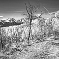 Colorado Backcountry Autumn View Bw by James BO  Insogna