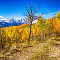 Colorado Backcountry Autumn View by James BO  Insogna