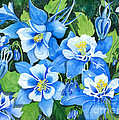 Colorado Columbines by Barbara Jewell