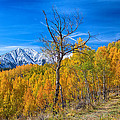Colorado Fall Foliage Back Country View by James BO  Insogna