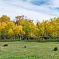 Colorado Fall Panorama by Baywest Imaging