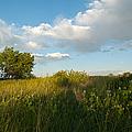 Colorado June Evening Landscape by Cascade Colors