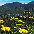 Colorado Rocky Mountain by Susan E Robertson