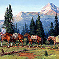 Colorado Outfitter by Randy Follis