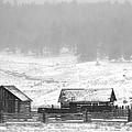 Colorado Pioneer by Corrie Blackshear