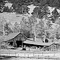 Colorado Rocky Mountain Barn Bw by James BO Insogna