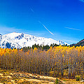 Colorado Rocky Mountain Independence Pass Autumn Pano 1 by James BO  Insogna