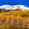 Colorado Rocky Mountain Independence Pass Autumn Pano 2 by James BO  Insogna