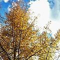 Colorado Sky by Paulina Roybal