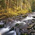 Colorado Stream - Fall by Harold Rau