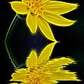 Colorado Wildflower by Shane Bechler