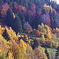 Colored Landscape by Patrick Kessler
