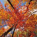 Colored Leaves Ground To Sky by Marie Fierek